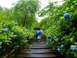 rainy june feel the beauty of rain in japan matcha japan travel
