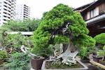 Learn The Japanese Aesthetic Art Of Bonsai Care At Tokyo S