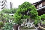 Learn The Japanese Aesthetic Art Of Bonsai Care At Tokyo S Shunkaen Matcha Japan Travel Web Magazine