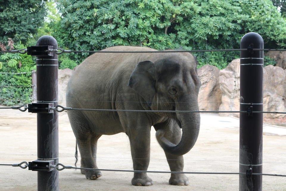 上野動物園 ゾウ