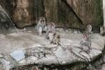 ueno zoo monkey