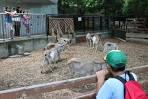 上野動物園 子ども動物園