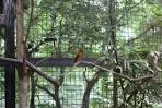 ueno zoo japanese bird