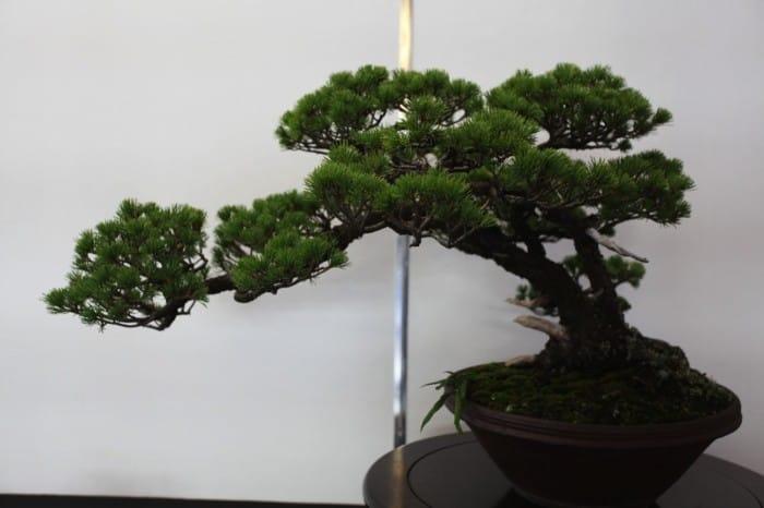 Hasil gambar untuk Museum Seni Omiya Bonsai (Saitama-shi)