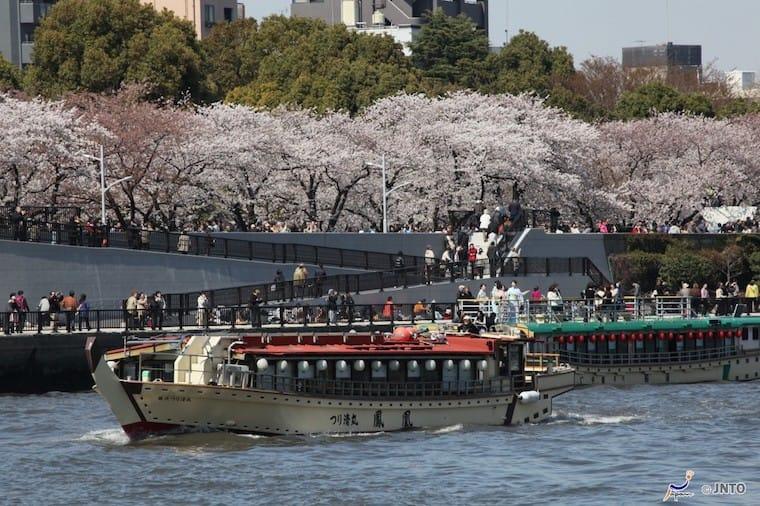 ดอกซากุระ แม่น้ำสุมิดะ (Sumida River) และ สวนสาธารณะสุมิดะ (Sumida Park)