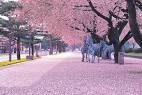 The 44 Best Cherry Blossom Spots All Around Japan 2018