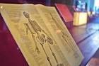 來集聚100萬冊東洋書籍的「東洋文庫」感受亞洲文化魅力!