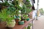 th_osaka_bonsai_cafe_20160405b