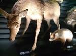 迫力の化石や標本も!「国立科学博物館 日本館」の楽しみ方