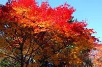 Tips Menikmati Musim Gugur di Jepang