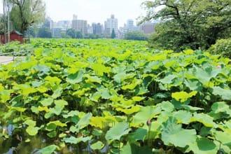 【上野.景點】都市中的綠洲,在不忍池休息片刻吧!