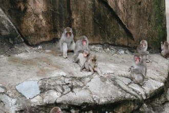 【上野.景點】想看哪些動物呢?上野動物園推薦路線3選