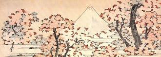 【SAKURA】ทำไมทุกคนถึงชอบดอกซากุระ – เหตุผลที่คนญี่ปุ่นให้ความสำคัญกับการชมซากุระ