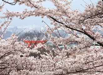 Spring In Japan: Traveling, Clothing And Weather In March-May