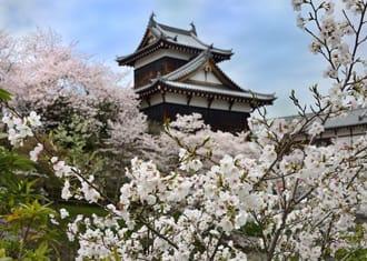 Inilah 10 Spot Hanami Pilihan dengan Pemandangan Sakura Khas Jepang di Wilayah Kansai! (Edisi 2020)