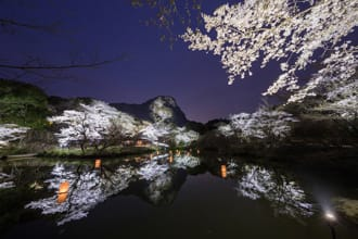 <div class='captionBox title'>夜桜を見るならここ!幻想的な桜のライトアップ12選</div>