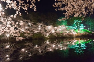 One Of Japan's Top 3 Night Cherry Blossom Views: Takada Park, Niigata