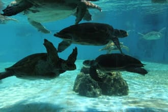 <div class='captionBox title'>在「沖縄美麗海水族館」與海龜・海牛來個約會吧!</div>