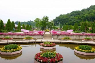 Ashikaga Flower Park In Tochigi - A Dream Destination Near Tokyo
