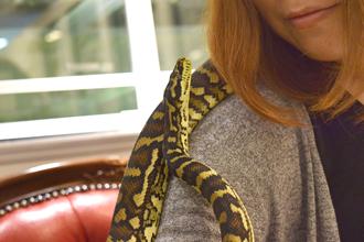 能與蛇共舞的咖啡廳「Tokyo Snake Center」