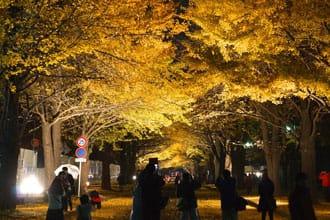 札幌秋季三天兩夜行程推薦!享受銀杏紅楓與肥美秋蟹