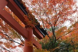 在地人的東京秋季賞楓人氣與私房景點十選