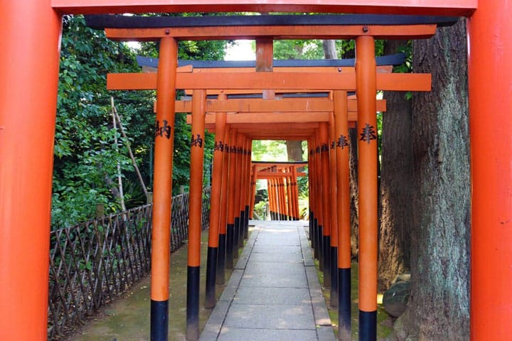 Vermilion Torii Gates In Hanazonoinari Shrine, Ueno Park