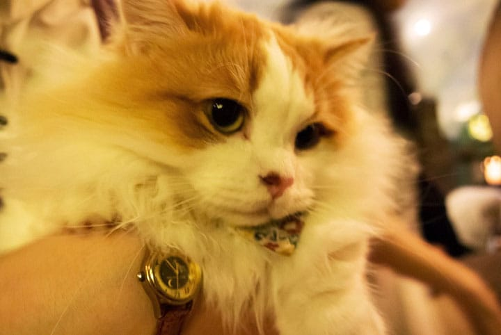 Cat Cafe Temari No O-Uchi: A Visit to the World of Cats (Kichijoji)
