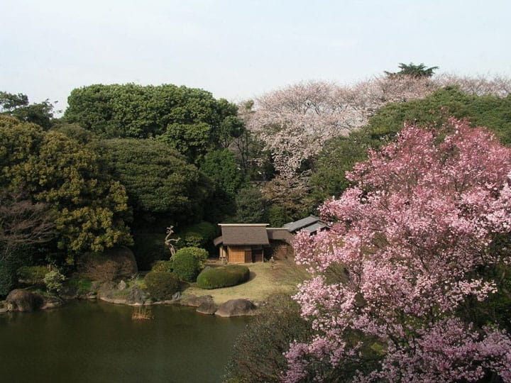 The Wonders of the TNM's Toyo-kan in a Japanese Garden