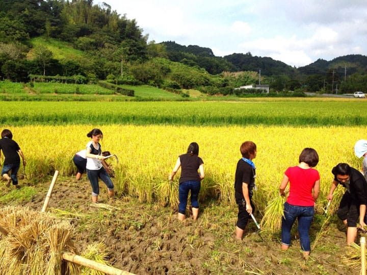 Tackling A Big Seasonal Event: Rice Harvesting With Exchange Students!