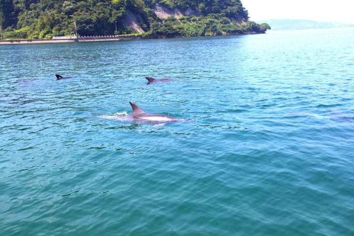 Meet And Swim With Wild Dolphins At Notojima Island, Ishikawa!