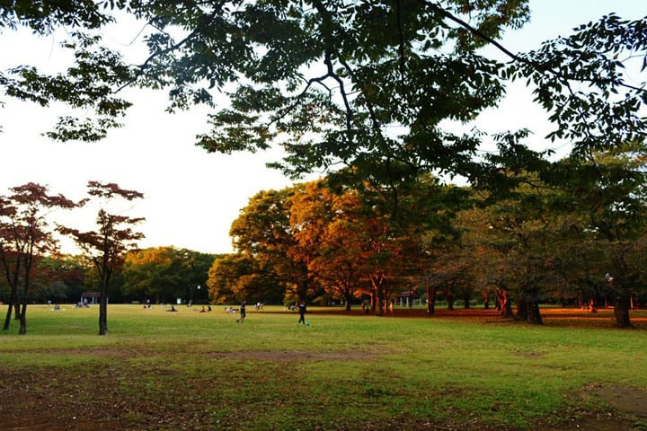 Yoyogi Park: Harajuku's Secret Sanctuary