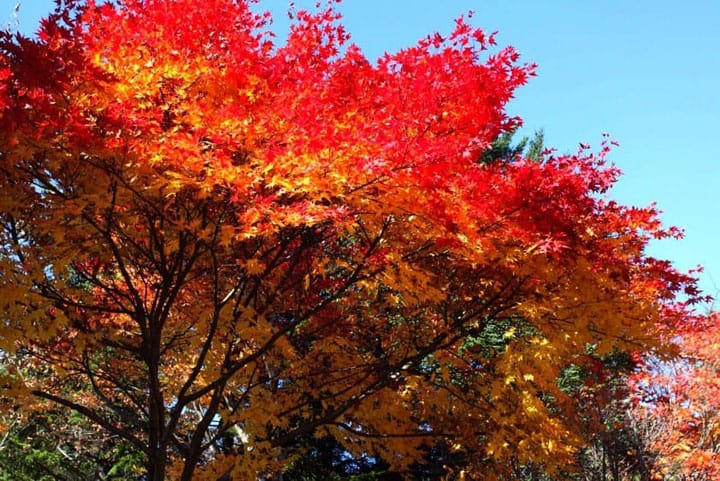 Image result for 8 Gorgeous Spots To Experience Fall Foliage In Japan