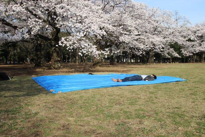 【櫻花】賞花時最重要的「擇地」方法與禮節