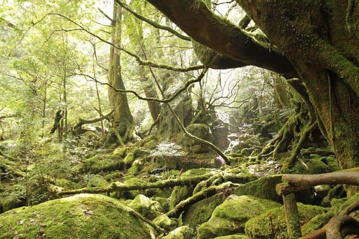 死ぬまでに一度訪れたい、日本の世界遺産まとめ-自然遺産編-