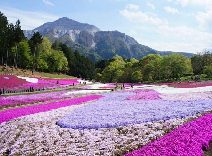 【埼玉】東京近郊,擁有許多自然魅力的埼玉縣人氣景點!