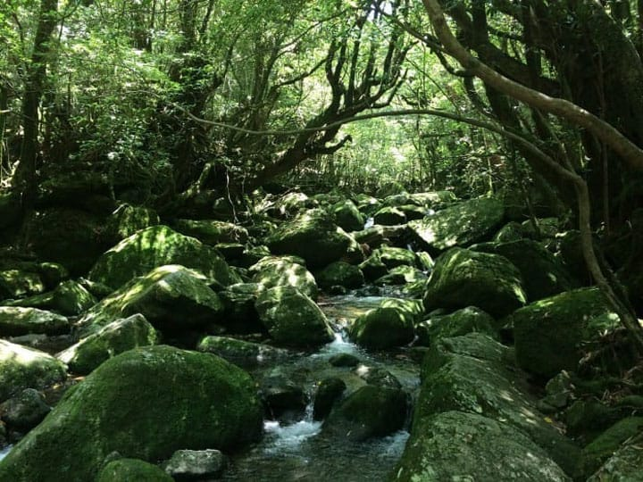 Trekking In Yakushima - Explore The Course Virtually!