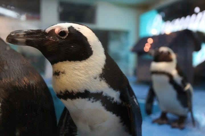 Enjoy Drinks With Penguins At Penguin Bar Ikebukuro!