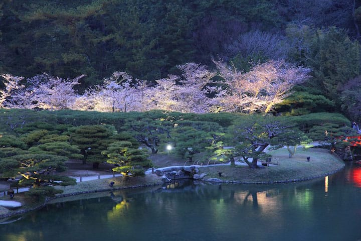 5 Must-See Cherry Blossom Spots In Central Japan And Shikoku