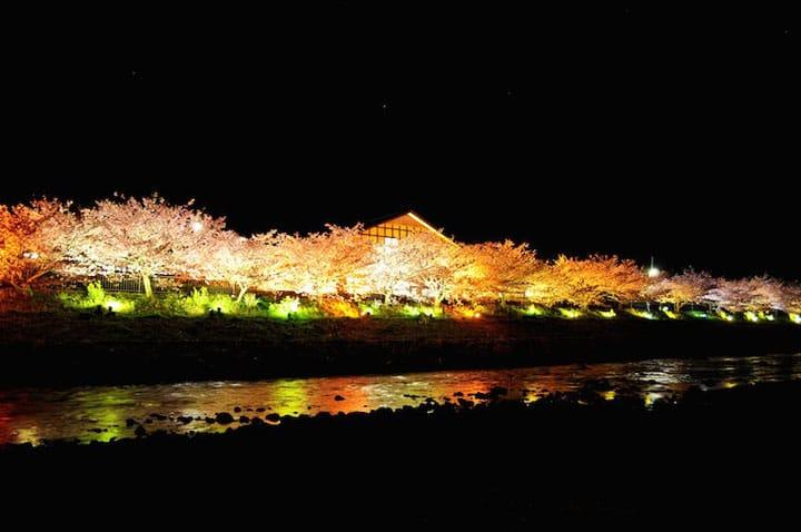 Ngắm núi Phú Sỹ, suối nước nóng, lâu đài! 7 địa điểm ngắm hoa anh đào ở khu vực Kanto