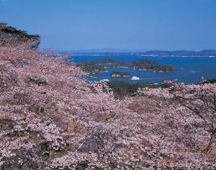 Japan's Cherry Blossom Calendar 2018: Seasonal Forecast And Best Spots!