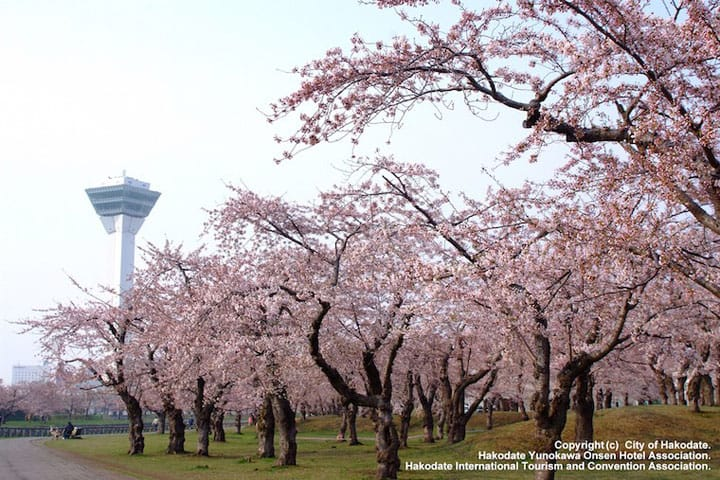 4 Famous Cherry Blossom Viewing Spots In Hokkaido