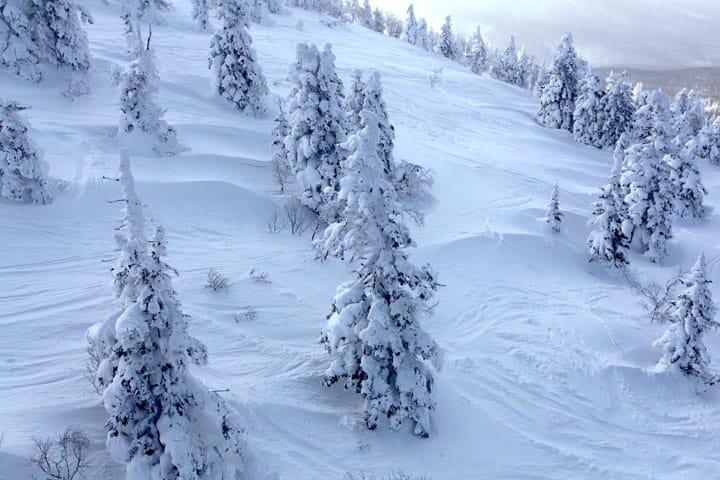 -20℃极栋世界。在青森「八甲田」观看雪白色的树冰