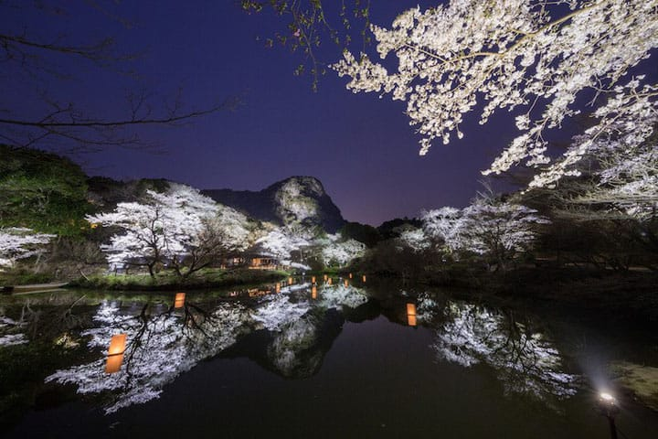 9 Fantastic Cherry Blossom Night Time Illuminations In Japan