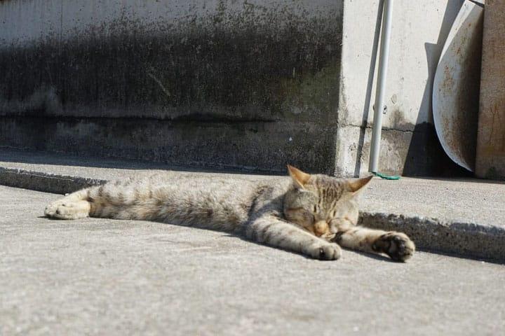 在香川猫岛「男木岛」,不仅可以和猫咪玩!还要看艺术作品!