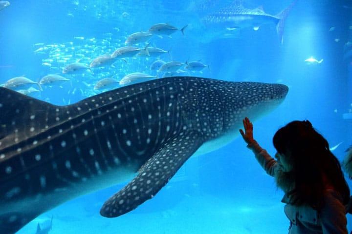 【大阪·海游馆】邀您体验生命的跃动~看看太平洋的风情~