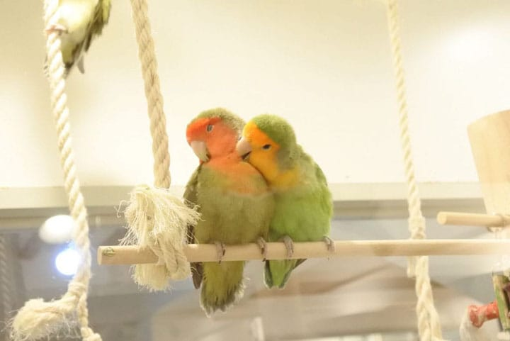 Meet Little Birds At Kotori Cafe, Omotesando