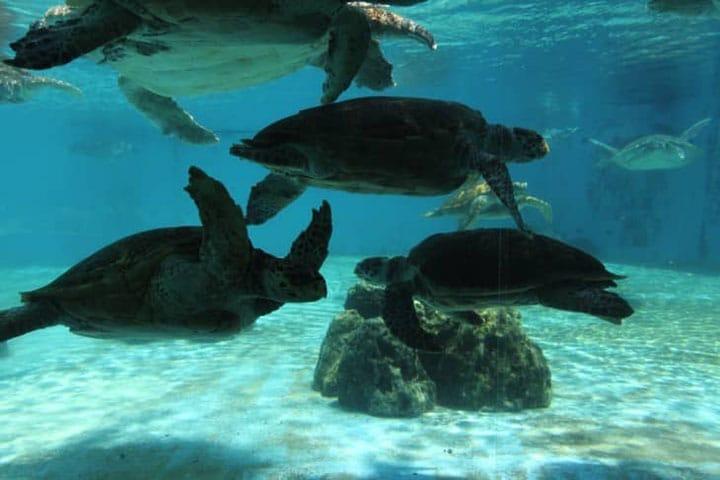 在「沖縄美麗海水族館」與海龜・海牛來個約會吧!