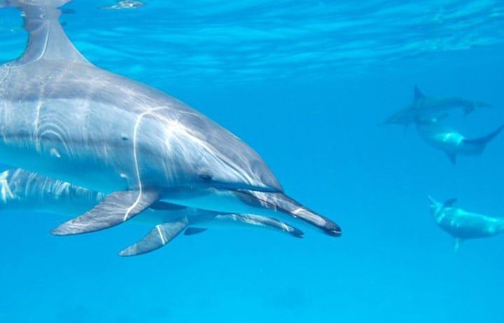 Menikmati Ekowisata Habitat Lumba-Lumba Hidung Botol di Pulau Mikurajima