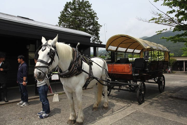 Horse Drawn Carriage Tours in Yufuin - A Memorable Experience!